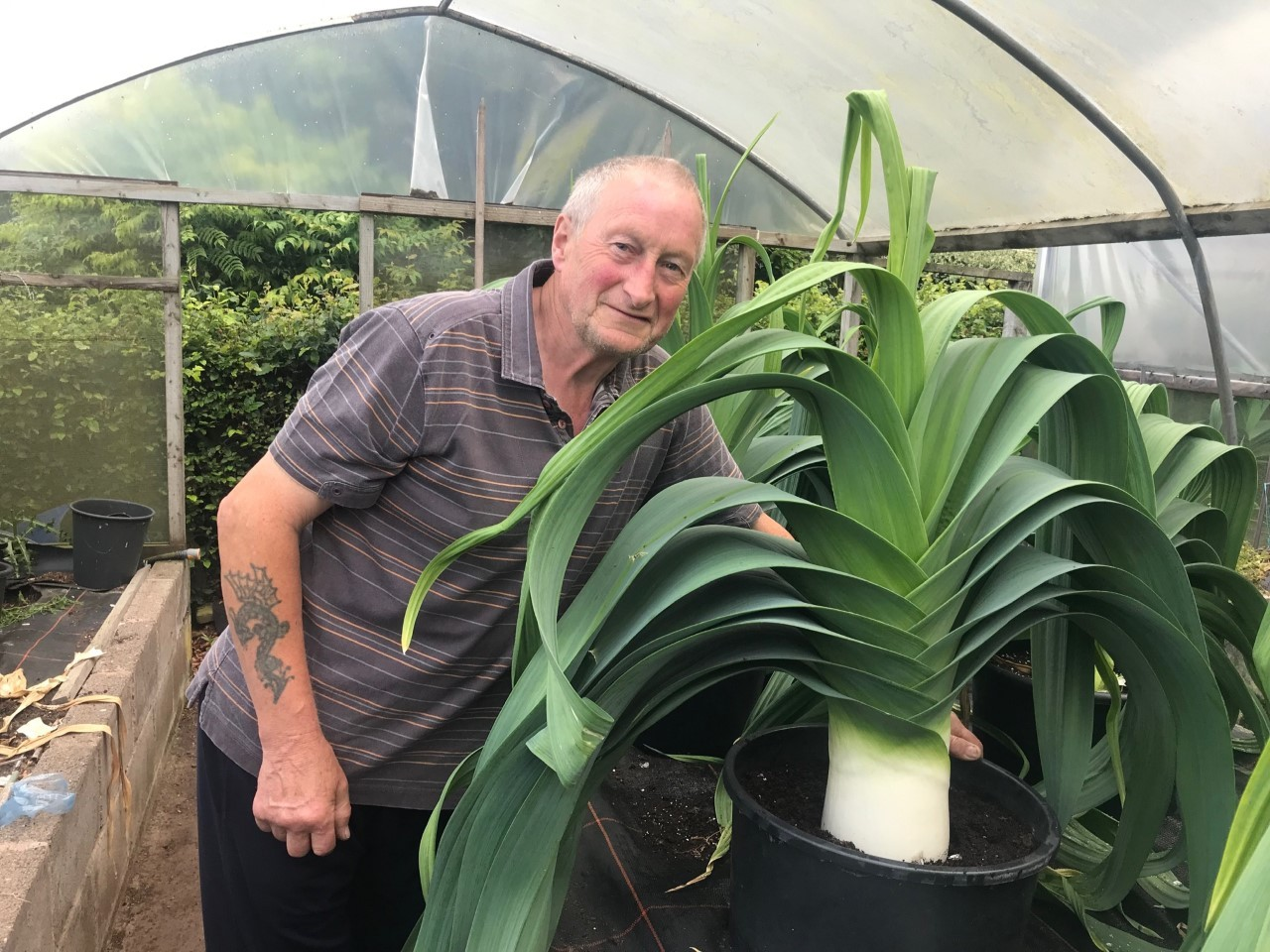 Giant leeks catch the eye of national judges