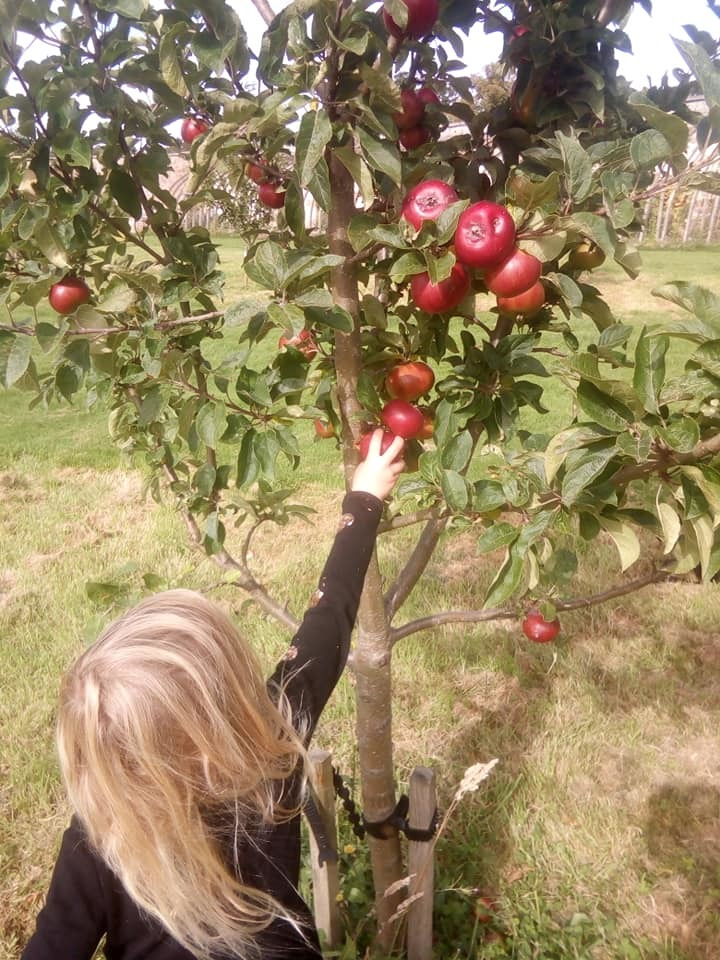 Tim's Tales: Apple lover to the core