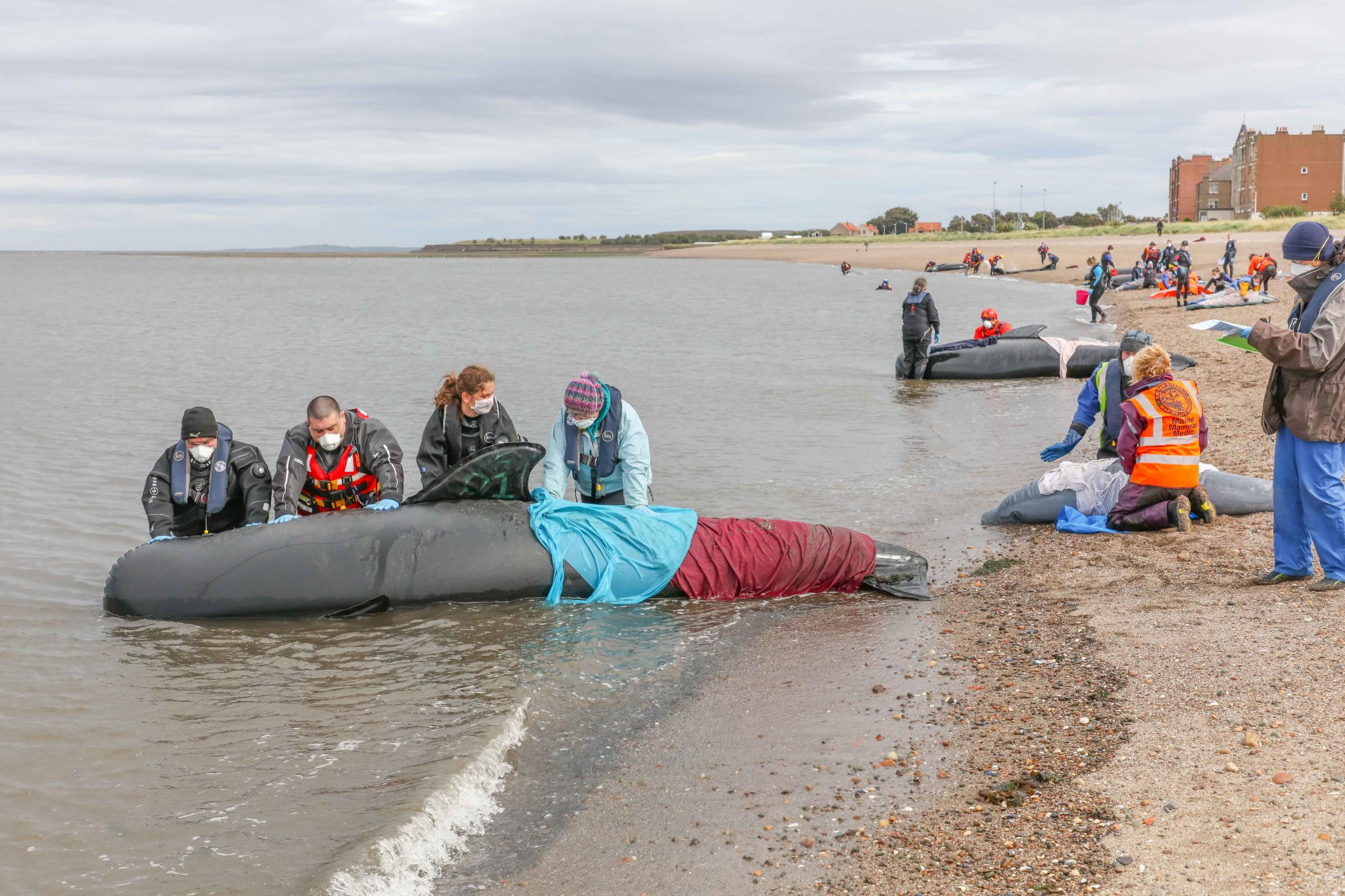 PICTURES: Life-size inflatable whales 'released' at Fisherrow
