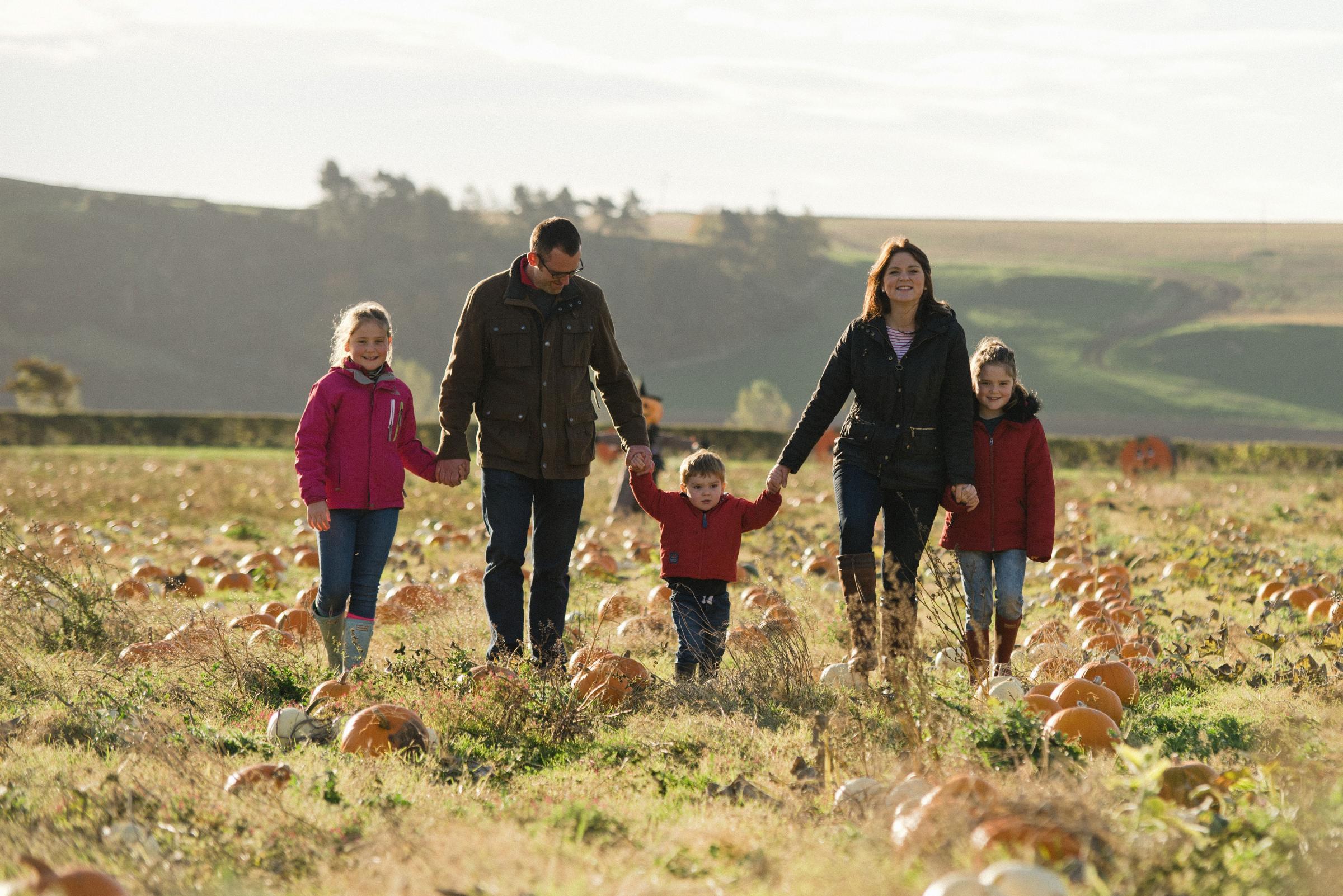 East Lothian's 'pick your own pumpkin' farm open for Halloween