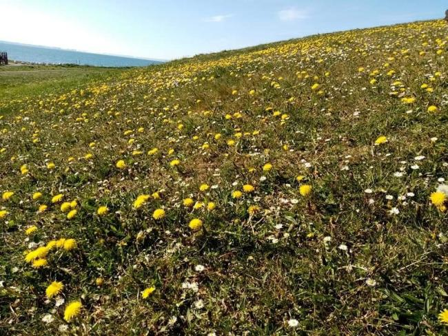 Should East Lothian welcome wildflowers? Picture: Tim Porteus