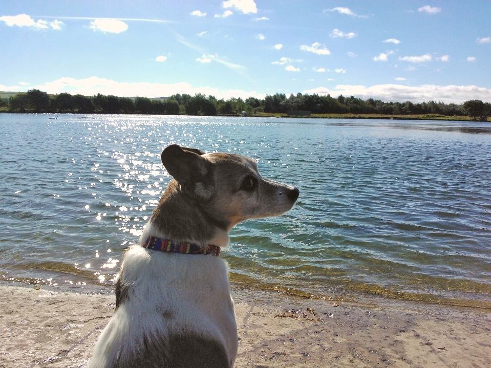 Сайты Собачьих Знакомств
