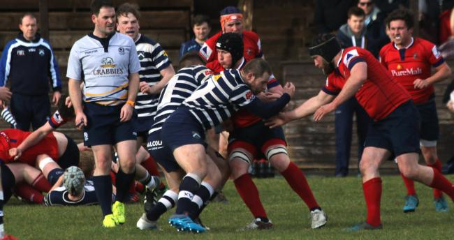 Back-row Jonny Riddell carries Haddington forward. Image Bob Johnstone/Glasgow Accies