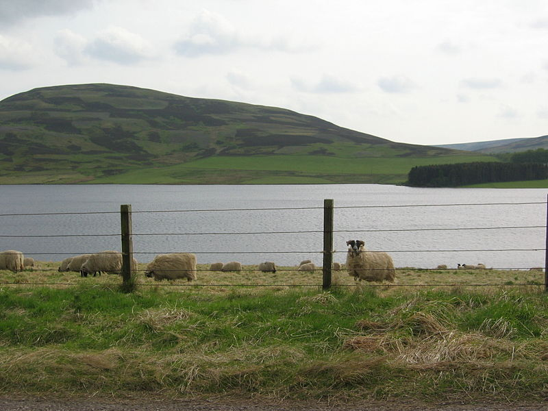 Whiteadder Reservoir
