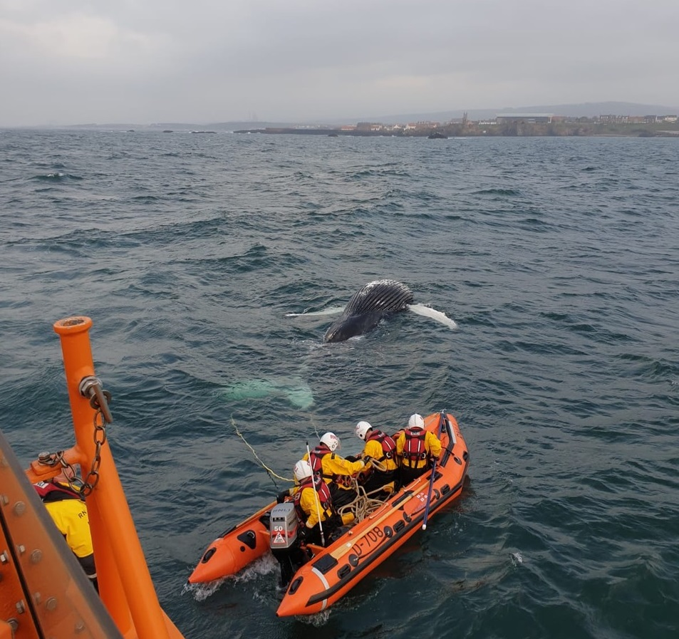 Whale which washed up dead on beach is moved by lifeboat
